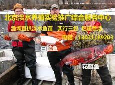 北京淡水鲤鱼苗批发鲤鱼苗出售鲤鱼苗批发价