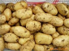 围场土豆货主联系电话 蔡先生