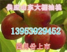 甜油桃批發 臨沂油桃產地 山東大棚油桃價